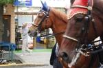 お会式:騎馬隊①