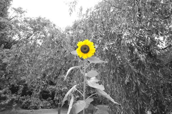 パートカラー:黄
