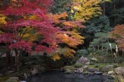南禅寺にて⑤ 南禅院庭園