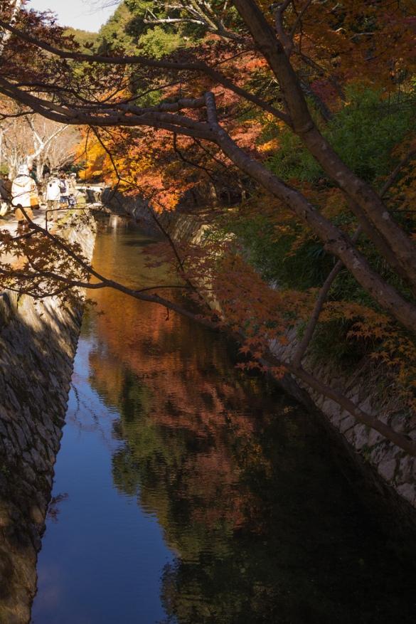 哲学の道 小川に映る紅葉